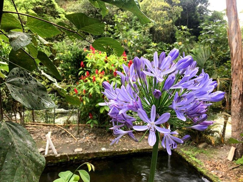 просто красивый цветочек