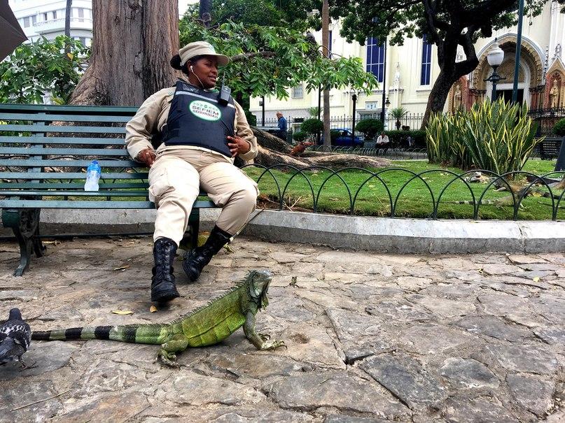 полицейский и игуана