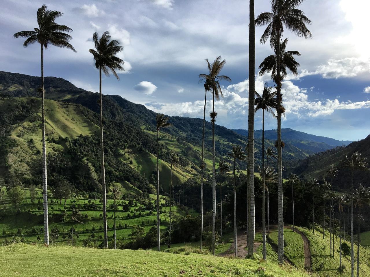 долина кокора