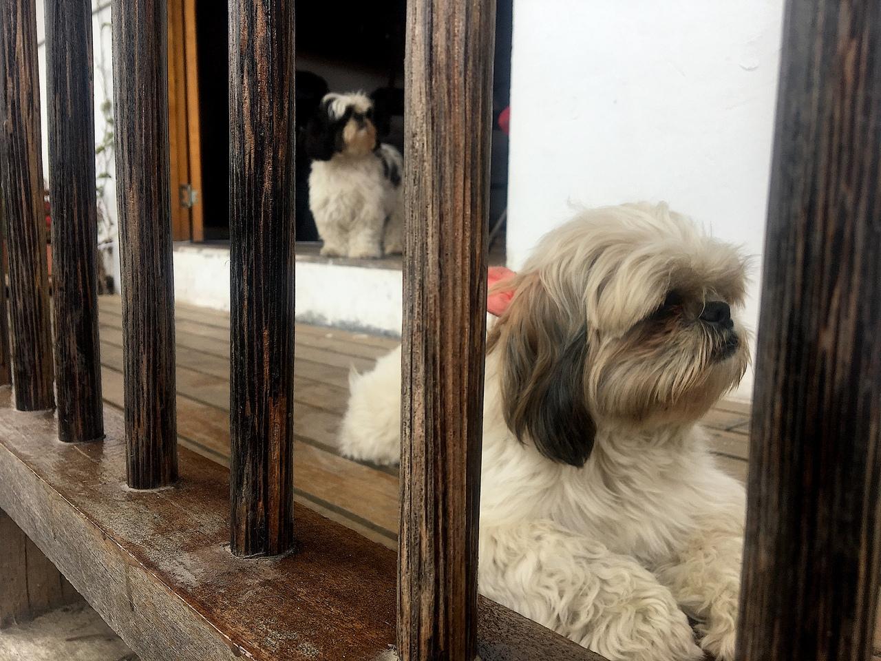 собачки милашки